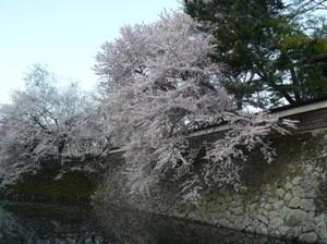 Suwasakura